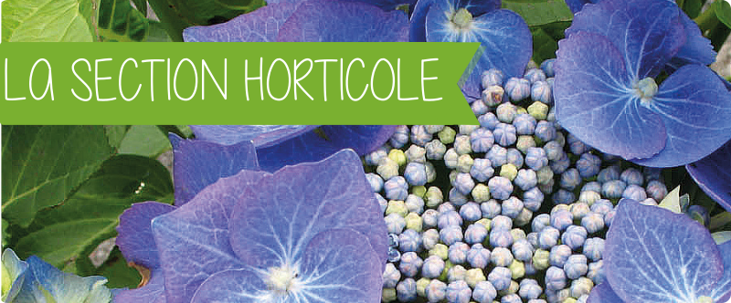SECTION HORTICOLE